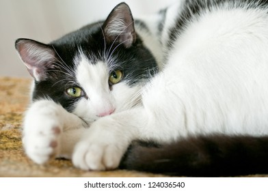 Cute black and white cat lying in a chair