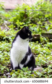 Cute black and white cat sitting in the green grass in the garden and looking to the side