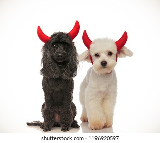 cute black and white dogs wearing red devil horns for halloween, collage image
