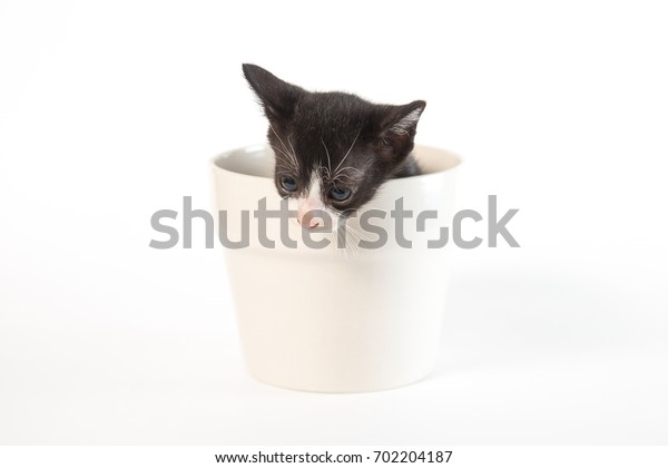 Cute black and white kitten isolate on white background