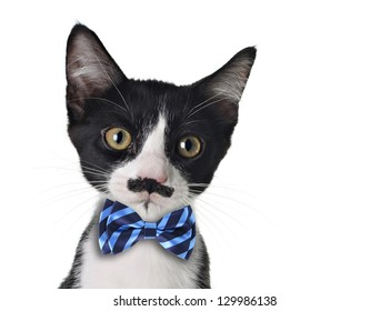 Cute black and white kitten with mustache and bow tie.