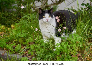 cute black and white tomcat stands in the garden in a bed in the greenery and looks attentive