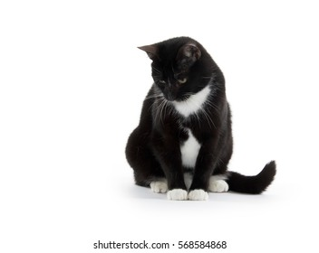 Cute black and white tuxedo cat on white background
