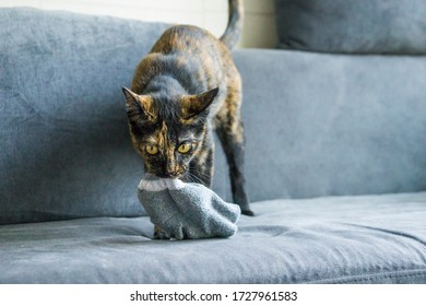 Cute black and yeallow cat playing with a sock in the couch at home