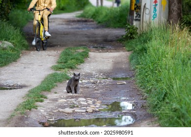 Cute blue cat in a countryside with a bike behind