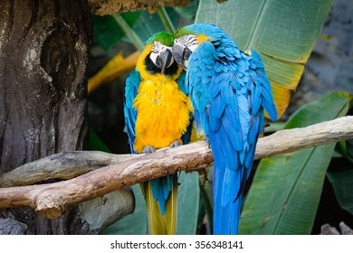 Cute blue and gold macaw in tropical forest
