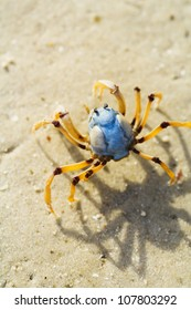 Cute blue and yellow crab on the ebach