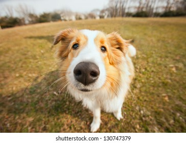 Cute border collie puppy dog closeup outside