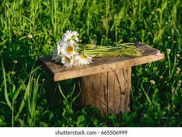Cute bouquet of white field daisies, lying on a wooden stump in the forest
