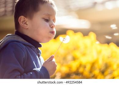 Cute boy blowing dandelion at sunset, South Australia