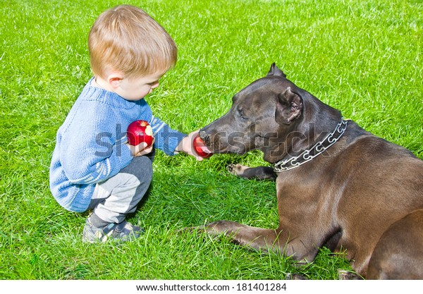 Cute boy regales to a dog apple sitting on the lawn