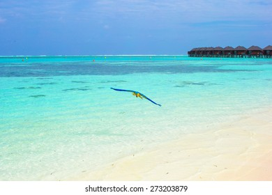 Cute bright colorful parrot flyong in the Maldives