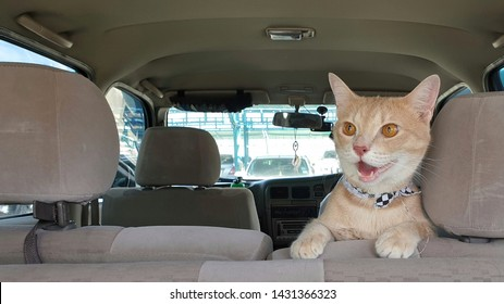 a cute bright orange cat wearing fabric collar in car when travel with owner on summer.