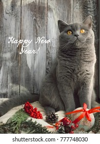 Winter composition cute british cat layout stock photo royalty free cute british cat layout for greeting card with text happy new year m4hsunfo
