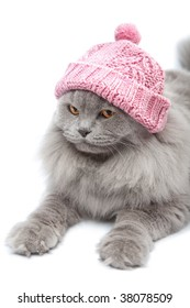 cute british cat wearing pink cap isolated