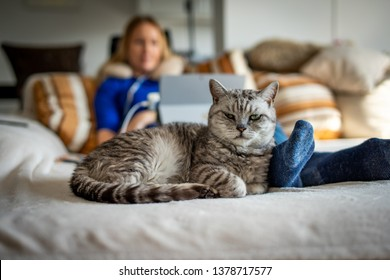 A cute British Shorthair cat with blonde girl