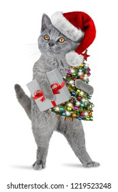 cute british shorthair kitten standing upright with santa claus hat costume christmas tree and gift isolated on white background xmas funny pet cat concept