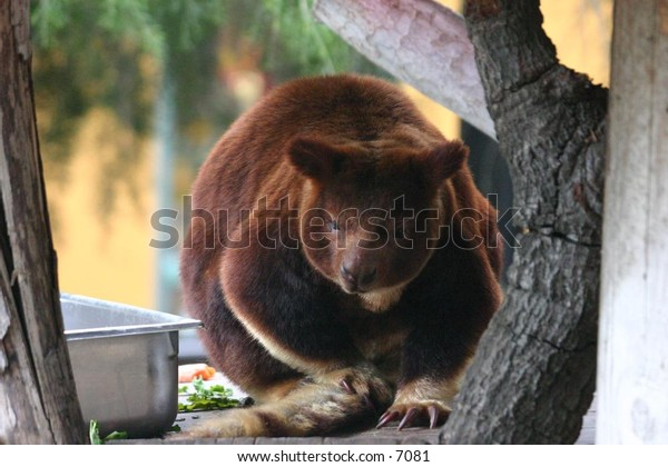 cute brown animal