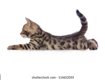 Cute brown Bengal kitten lying down sideview with tail up isolated on white background