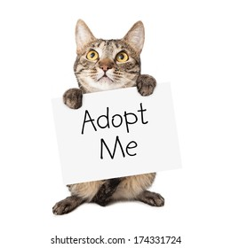 A cute brown and black striped cat holding up a white cardboard sign with the words Adopt Me on it