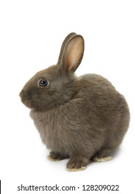 Cute brown bunny sitting over white background.