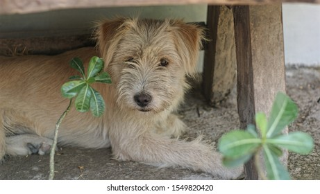 a cute brown dog