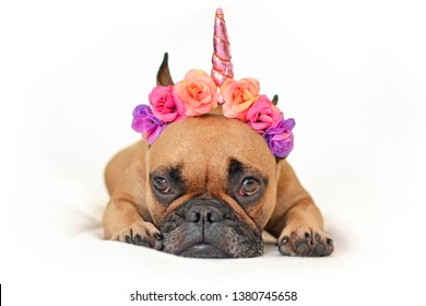 Cute brown French Bulldog dog with pink flower and unicorn horn headband lying on ground in front of white studio background