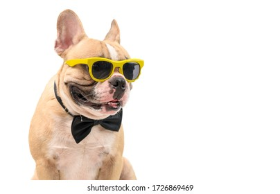Cute  brown french bulldog wear sunglasses with black bow tie hungry and makes mouth water isolated on white background, pet and animal concept