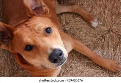 Cute brown mutt dog on rustic brown straw mat