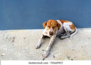 Cute brown strayed dog sleeping and sitting near blue wall with copy space for text. Homeless sad animal to be adopted. Social issue