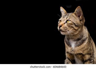 Cute Brown tabby cat on dark background
