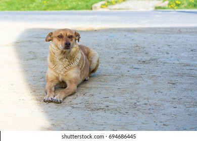 Cute brown-haired abandoned dog on the way