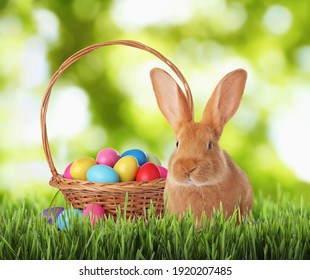 Cute bunny and colorful Easter eggs on green grass outdoors