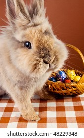 Cute bunny with egg basket