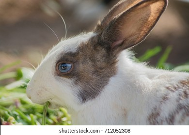 Cute bunny got attractive eyes.