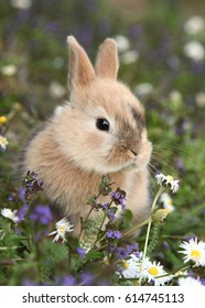 [EVENT] Forêt des brumes Cute-bunny-rabbit-colorful-meadow-260nw-614745113