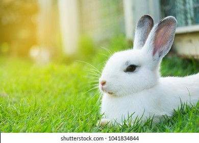 Cute bunny rabbit sitting on green grass in the garden.Animal nature background.Easter day concept idea.