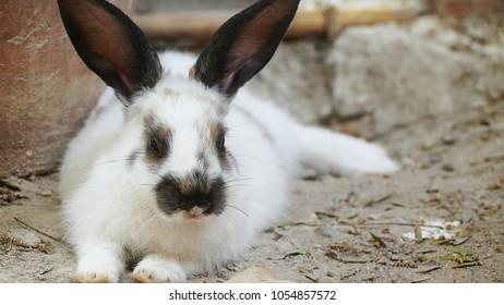 Cute bunny rabbits in farm