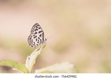 cute butterfly hang on leaves in the garden on vintage background