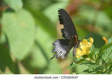 Cute butterfly resting on a yellow flower .