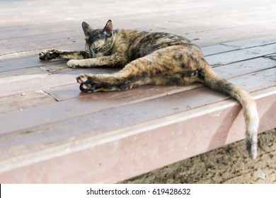 A cute calico cat sleep on wooden floor outdoors