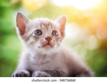 cute cat in afternoon sunlight and green bokeh background