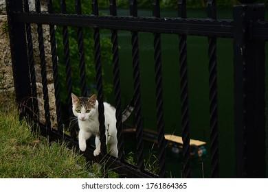 El lindo gato se acerca