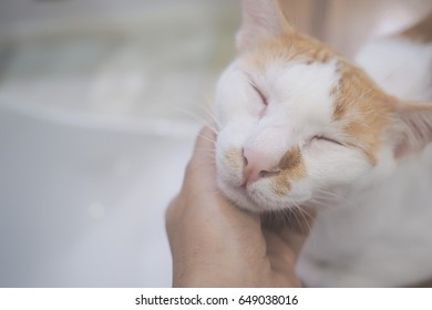Cute cat background.Face shot of sleepy tricolor cat,feeling relax,happy and comfort.With lady's hand touching and scratching under chin.Soft light warm mood.