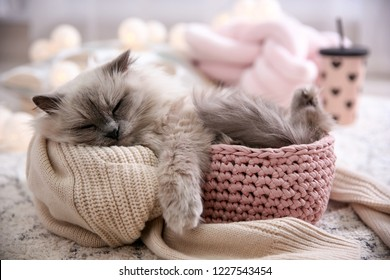 Cute cat in basket at home. Warm and cozy winter