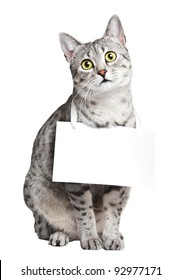 Cute cat with a blank card around her neck.  Cat is an Egyptian Mau.