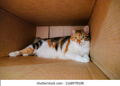 Cute cat in a box - shot with smartphone