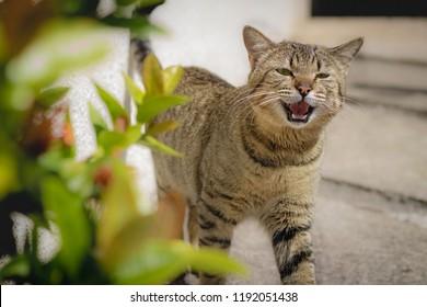 brindle cat images stock photos vectors shutterstock