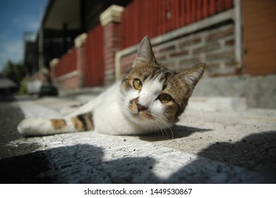 the cute cat close up with yellow eyes  blur background