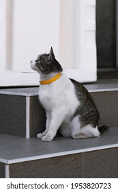 cute cat with a collar sits on the steps of the house